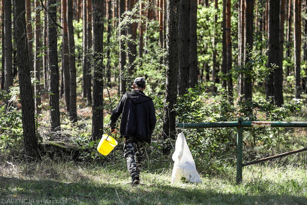 Na przełomie lata i jesieni w lasach jest najwięcej grzybów