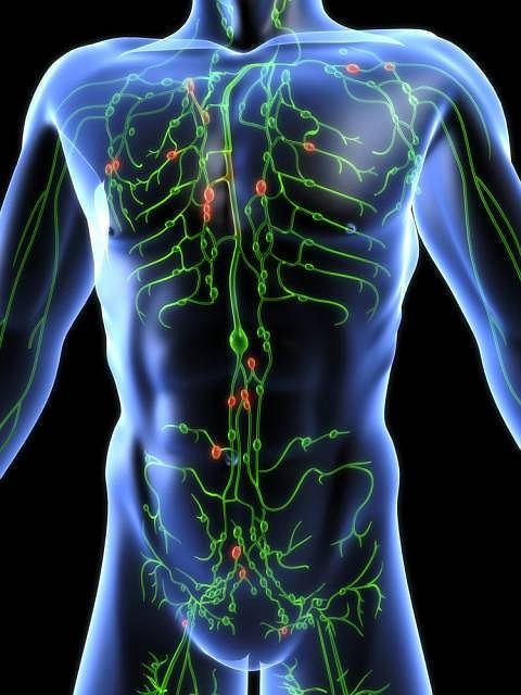 Układ limfatyczny odpowiada za prawidłowy przepływ płynów ustrojowych w organizmie oraz ochronę przed infekcjami