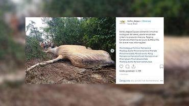 Zdjęcia martwego humbaka udostępnione przez organizację Bicho D'agua.