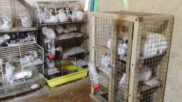 Mieszkaniec Piotrkowa Trybunalskiego trzymał 131 szczurów w kawalerce