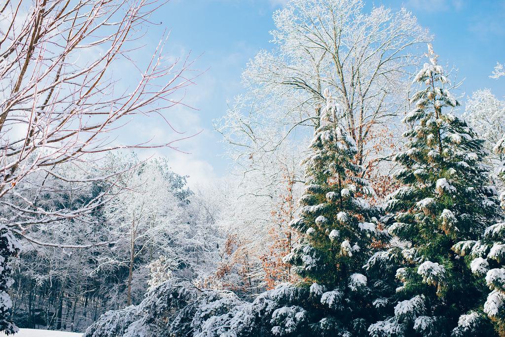 Jaka pogoda na święta? IMGW: Jest szansa na śnieg (zdjęcie ilustracyjne)