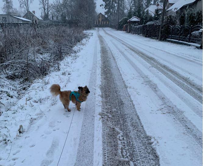 Śnieg w jednej z podwarszawskich miejscowości - 5 stycznia