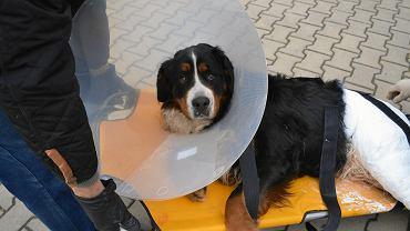 Pies Tarot