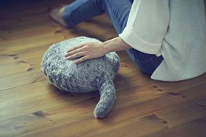 Prezent na walentynki: zrobotyzowany kot