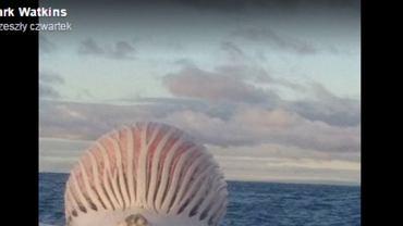 Martwy wieloryb