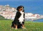 Pies w podróży po Europie. 5 atrakcji turystycznych przyjaznych zwierzętom