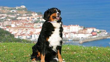 Pies na wakacjach/ Fot. materiały HomeToGo