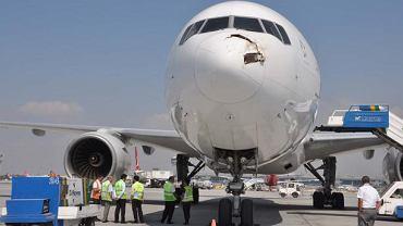 Samolot po zderzeniu ze stadem bocianów