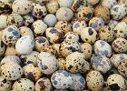 Jaja przepiórcze - dlaczego warto je jeść i jak najlepiej je przygotować?