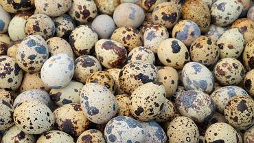 Jajka przepiórek są szczególnie cenione w Japonii, Korei, Indonezji oraz w krajach Ameryki Południowej oraz Środkowej