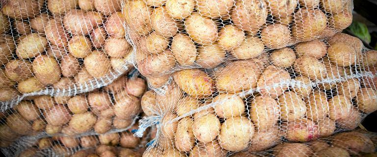 Ziemniaki mocno zdrożały. GUS: ceny w skupie w górę o 75 proc.
