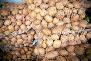 Ziemniaki mocno zdrożały. GUS: ceny w skupie w górę o 75 proc. Ekonomista podaje powody