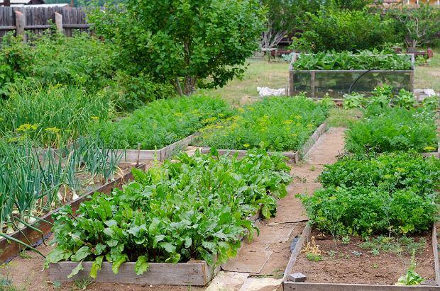 Uprawa warzyw dla początkujących
