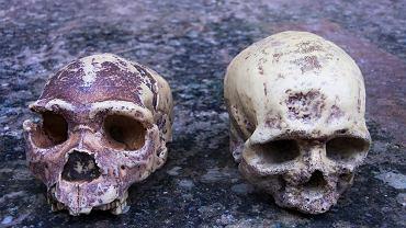 Geny odziedziczone po Neandertalczykach zarówno zwiększają, jak i zmniejszają ryzyko ciężkiego COVID-19