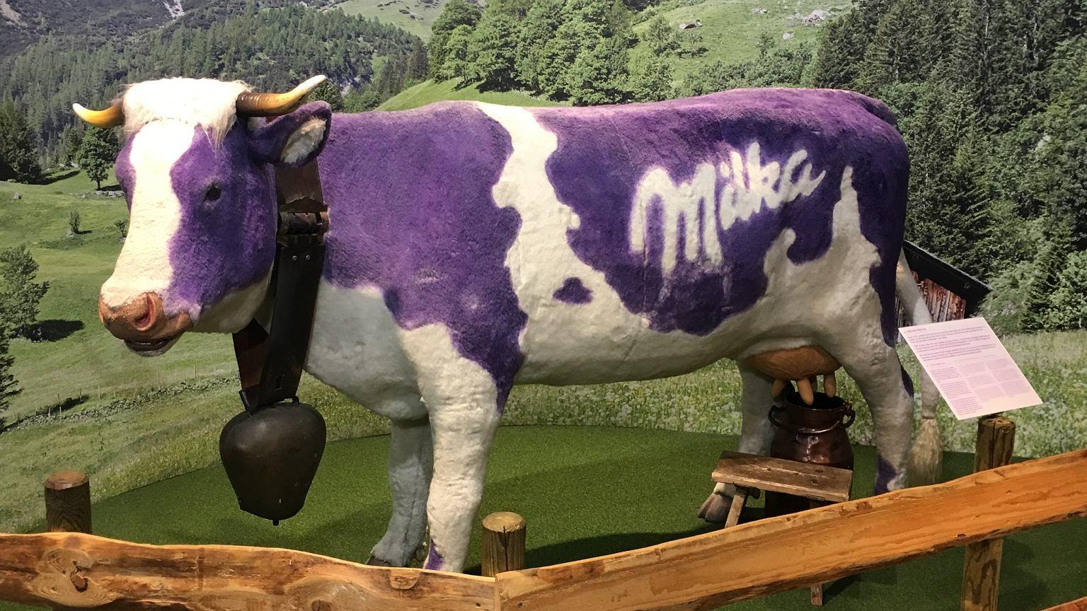 Fioletowa krowa Milki