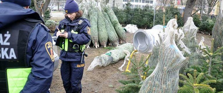 Straż miejska sprawdza wszystkie punkty sprzedaży choinek. ''Mogą pochodzić z nielegalnej wycinki''