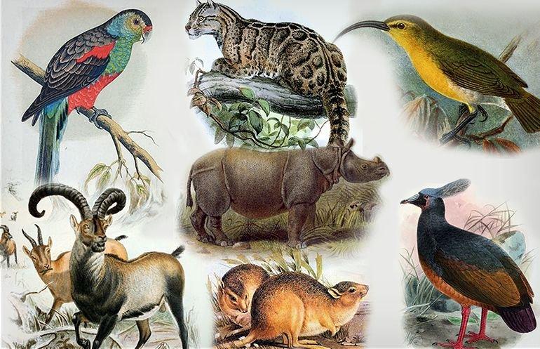 Fragmenty rycin przedstawiających wymarłe gatunki
