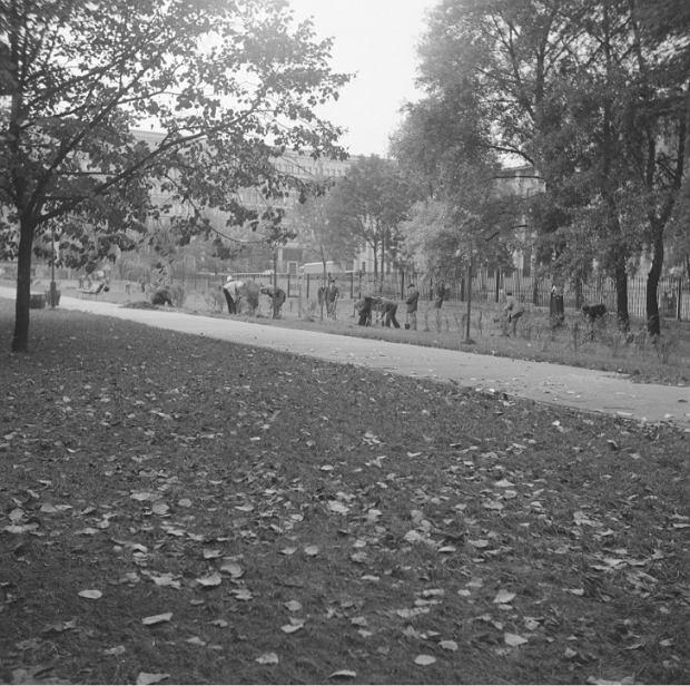 Sadzenie drzewek w parku koło gmachu Muzeum Narodowego, zdjęcie datowane na lata: 1967 - 1988