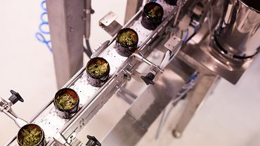 Linia produkcyjna medycznej marihuany CanPoland