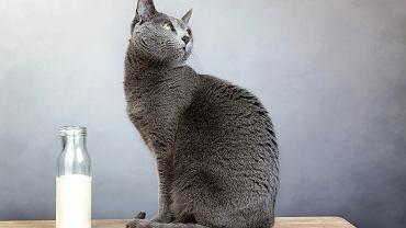 Kotom podawać można wyłącznie 'kocie' mleko z obniżoną zawartością laktozy