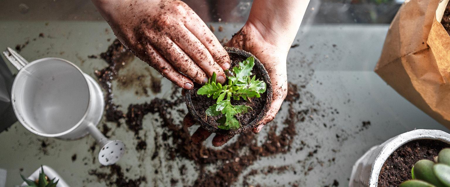 Odpowiednia uprawa wymaga koncentracji uwagi, dostrzegania pierwszych oznak niedomagania i zrozumienia, czego potrzebują rośliny, żeby się dobrze rozwijać (fot. Shutterstock)