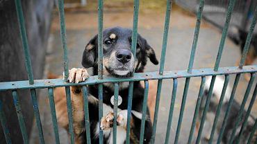Pies ze schroniska dla zwierząt w Częstochowie