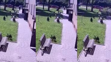 Drzewo runęło na chodnik