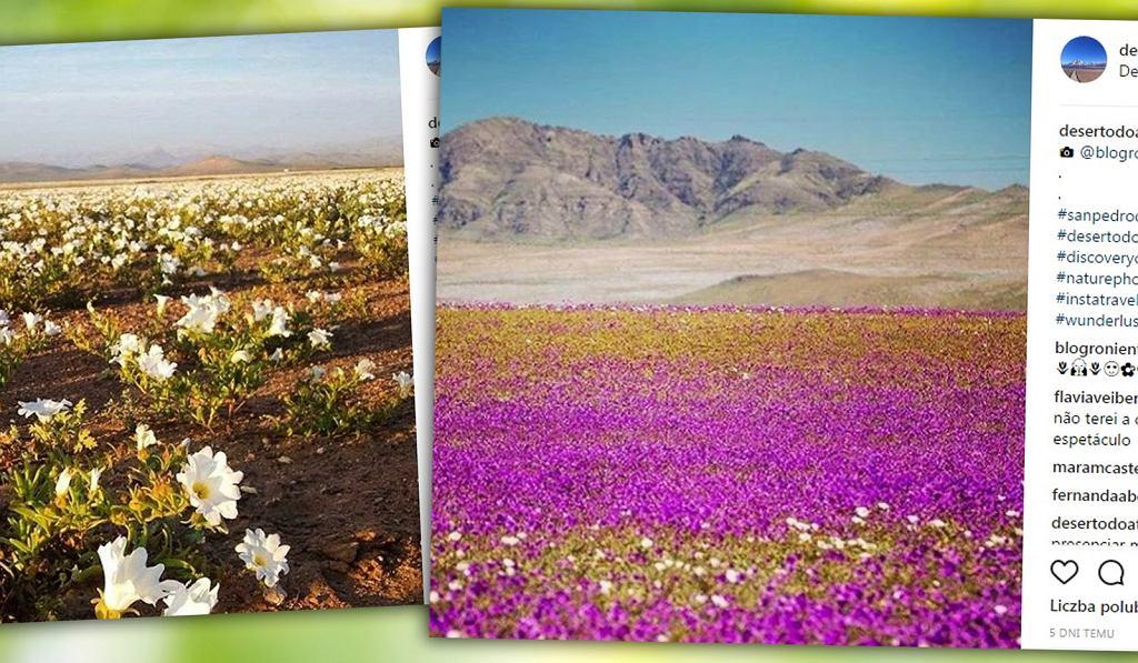 Pustynia Atakama w Chile to jedno z najsuchszych miejsc na świecie.