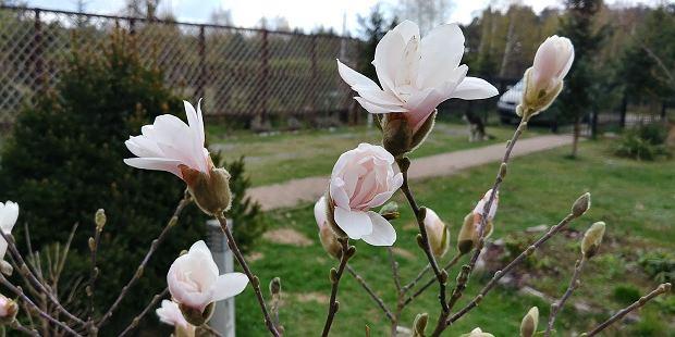 kwiaty lg g6 szeroko