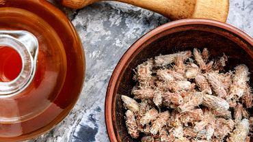 Syrop sosnowy przygotowywany jest z młodych pączków i pędów sosny