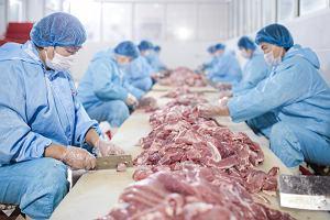 """W Chinach zidentyfikowano nowy szczep świńskiej grypy o """"potencjale pandemicznym"""""""