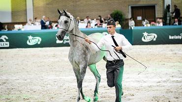 Aukcja Pride of Poland w Janowie Podlaskim. Nie sprzedano trzech z sześciu wylicytowanych koni