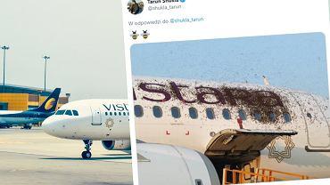 Rój pszczół obsiadł samolot w Indiach