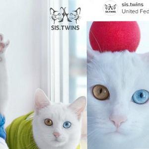 Najpiękniejsze kocie bliźniaczki?