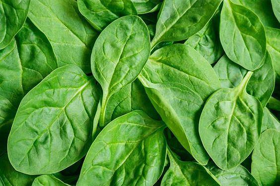 Szpinak jest warzywem, które bardzo łatwo absorbuje zanieczyszczenia
