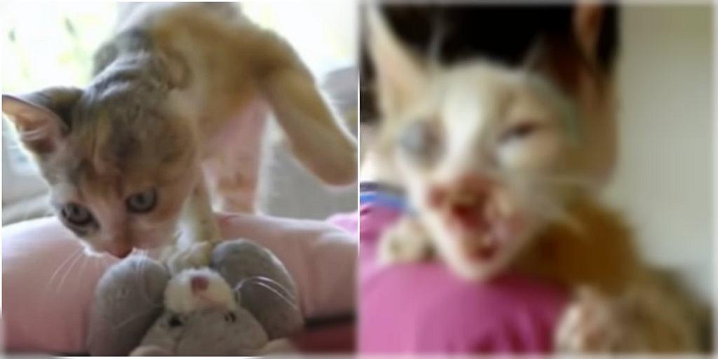 Kotka została uratowana przez siedmiolatkę