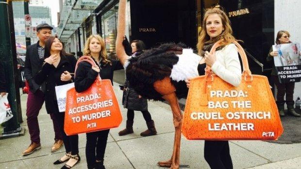 Jeden z performance'ów PETA, postulujących wycofanie strusiej skóry z oferty marek luksusowych