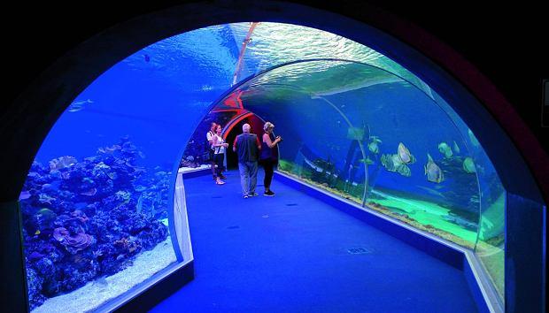 Oceanarium w Ejlacie