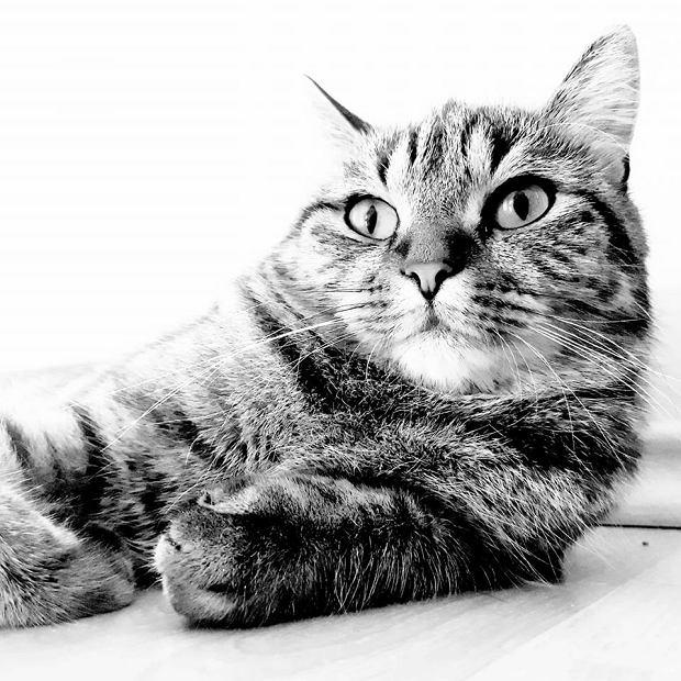 Zdjęcie numer 79 w galerii - Karmel, Daktyl, Kapitan Benny, Ptyś, Wiesław... Kochane i piękne - oto Wasze koty [GALERIA NA DZIEŃ KOTA]
