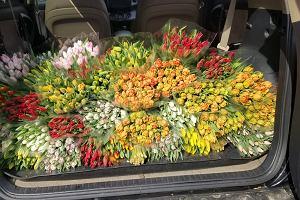 Kwiaciarnie zamknięte, a tulipan kwitnie. Producenci kwiatów ratują się obwoźną sprzedażą