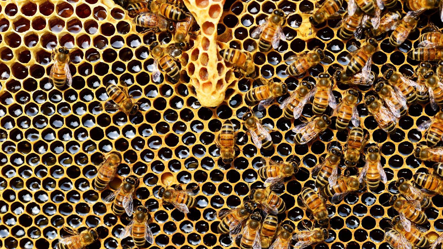 Akcja Adoptuj Pszczołę