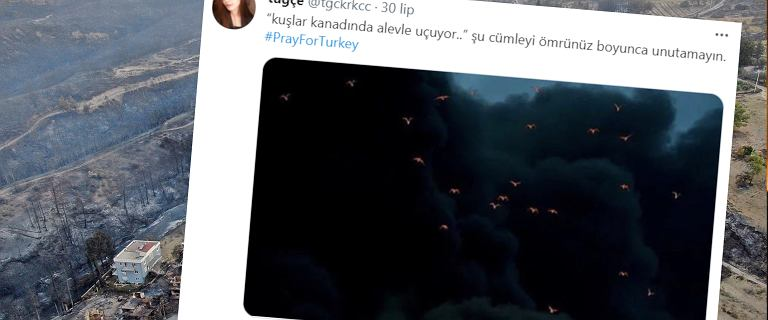 Turcja. W pożarach ucierpiały tysiące zwierząt. Na niebie ptaki z płomieniami na skrzydłach
