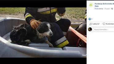 Uratowany przez strażaków pies.