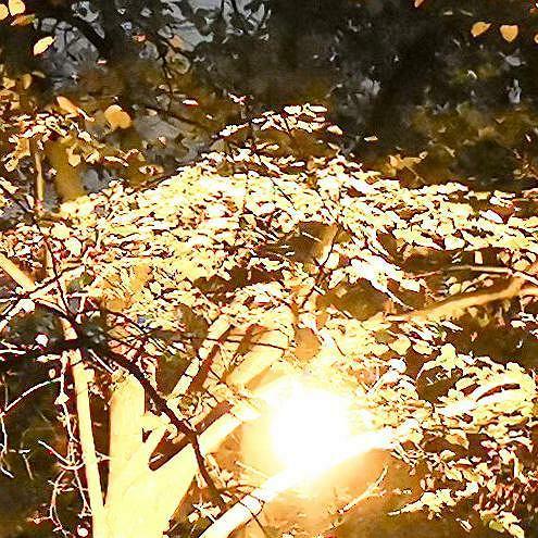 Huawei: widać szczegóły, zza złotych liści nawet prześwituje szaroniebieskie niebo