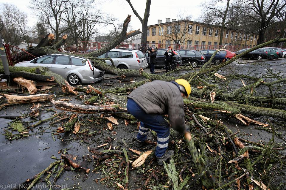 Szczecin, usuwanie skutków wichur. Zdjęcie ilustracyjne