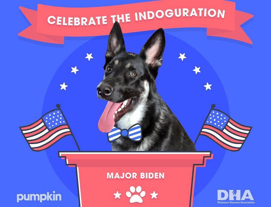 Internetowa impreza psa Majora - adoptowanego przez Joe i Jill Bidenów.