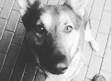 Rzecznik policji odpiera zarzuty ws. śmierci sześciu psów