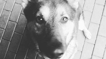 Pies, który zginął w wyniku awarii rury ciepłowniczej