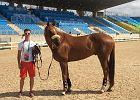 Rio 2016. Niezwykła podróż jedynego w swoim rodzaju, polskiego olimpijczyka