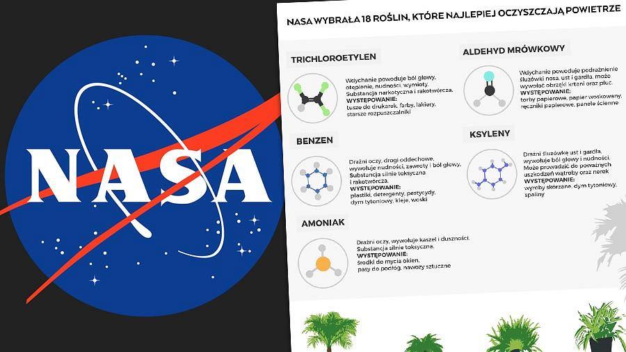 NASA wybrała 18 roślin, które najlepiej oczyszczają powietrze